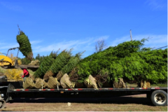 Trees_Being_Loaded_for_Transport_To_Site.png